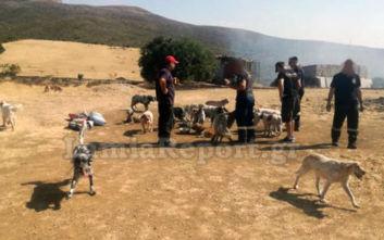 Πυρκαγιά σε κυνοτροφείο στη Θήβα, οι πυροσβέστες έσωσαν τα σκυλιά