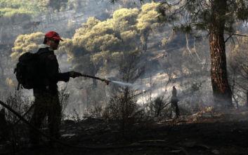 Μεγάλη φωτιά στη Νέα Μάκρη: Βίντεο-ντοκουμέντο από το πύρινο τείχος
