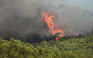 Φωτιά τώρα στην Κορινθία