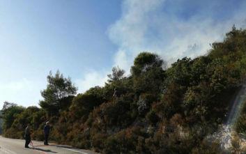Υπό μερικό έλεγχο η φωτιά στη Ζάκυνθο: Μέλισσες επιτέθηκαν σε πυροσβέστες