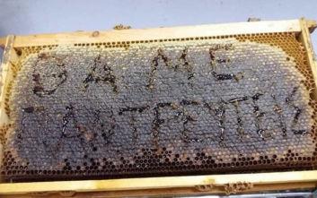 Πρόταση γάμου από... μέλι