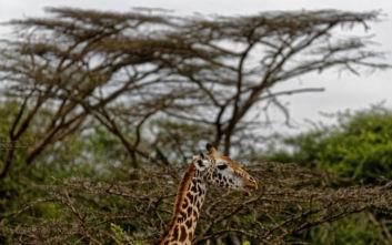 Έξι νεκροί από ξαφνική πλημμύρα σε πάρκο στην Κένυα