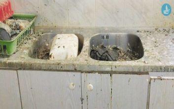 Ακαθαρσίες και νεκρά πουλιά στο πρώην δημαρχείο Ιαλυσού στη Ρόδο