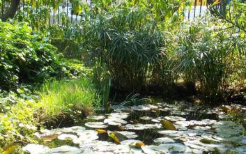 Ο ιστορικός Βοτανικός Κήπος του ΕΚΠΑ ανοίγει για το κοινό