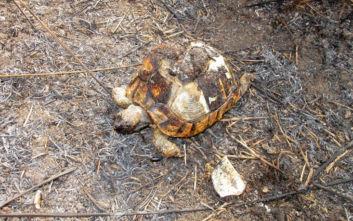 Φωτιά στην Αλυκή Πιερίας: Μεγάλες καταστροφές και νεκρά ζώα