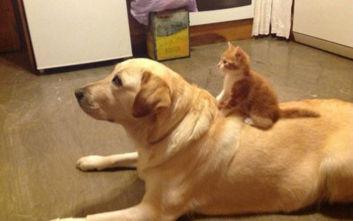 Γάτες δείχνουν σε σκύλους ποιος είναι το αφεντικό
