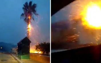 Παρανάλωμα του πυρός φοίνικας μετά από κεραυνό στην Κεφαλονιά