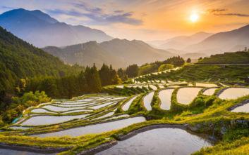 Εκπληκτικό φωτογραφικό κολάζ από τις πεδιάδες ρυζιού στην Ιαπωνία