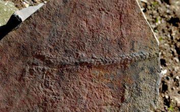 Βρέθηκε απολίθωμα ζώου σαν σαρανταποδαρούσα που σερνόταν πριν 550 εκατ. χρόνια στον βυθό