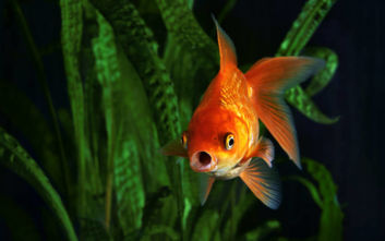 Τα ψάρια βιώνουν τον πόνο με τον ίδιο τρόπο που το κάνει και ο άνθρωπος!