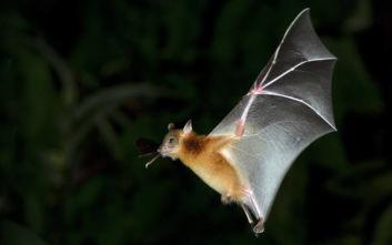 Ανακαλύπτοντας τα μυστικά των... νυχτερίδων