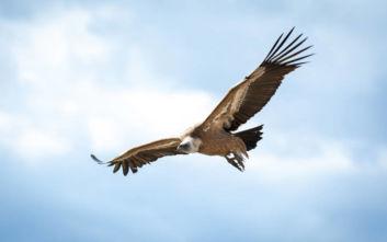 Το πουλί που πετά πιο ψηλά από κάθε άλλο
