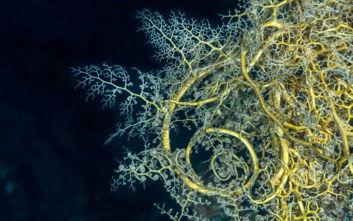Το απόκοσμο πλάσμα από τα βάθη της θάλασσας που καθηλώνει και τρομάζει