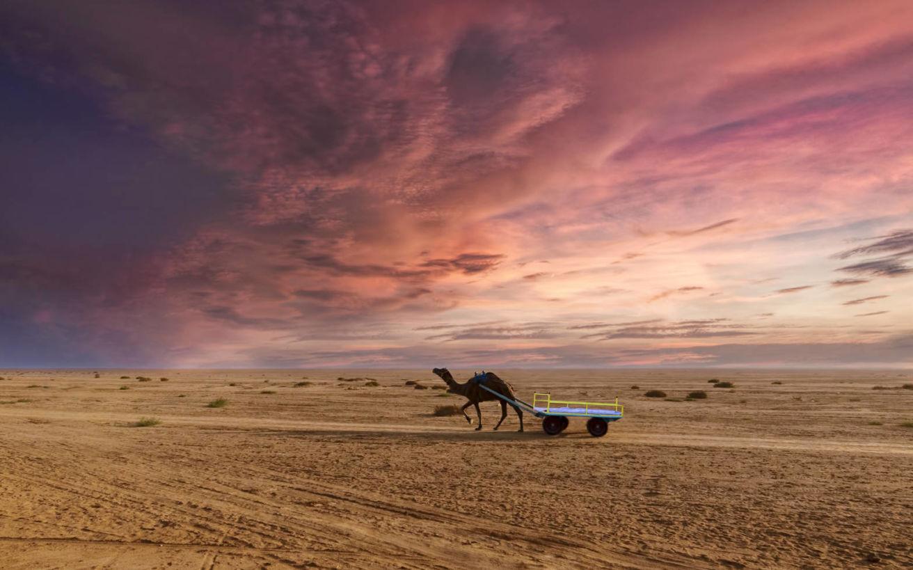 Ένα σπάνιο φυσικό θέαμα: η έρημος που γίνεται θάλασσα