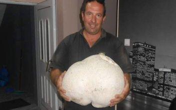 Βρήκε μανιτάρι-γίγας 11 κιλών στα Γρεβενά