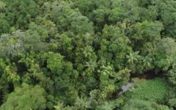 Δηλητηριώδες Κοράλλι της Φωτιάς, ένα από τα πιο επικίνδυνα μανιτάρια στον κόσμο