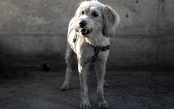 Δραπετσώνα: Ο σκύλος της οικογένειας Μαυρίκου που κατάφερε να σωθεί από τη «μοιραία βουτιά»
