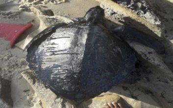 Βραζιλία: Έρευνα για τις πετρελαιοκηλίδες στις παραλίες ζήτησε ο Μπολσονάρου