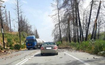 Καιρός: Δυνατοί άνεμοι έριξαν δέντρα πάνω σε αυτοκίνητα στην Κρήτη