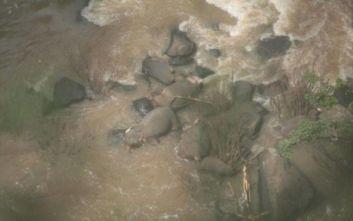 Πέντε ελέφαντες πνίγηκαν προσπαθώντας να σώσουν ελεφαντάκι σε καταρράκτη στην Ταϊλάνδη