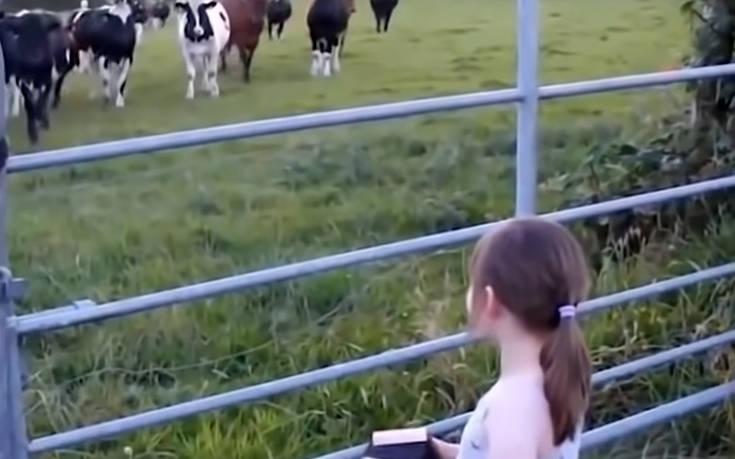 Πώς αντιδρούν τα ζώα στο άκουσμα της μουσικής