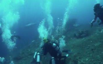 Μεγάλος λευκός καρχαρίας τρομοκράτησε δύτες την ώρα που εξερευνούσαν ύφαλο στο Μπαλί
