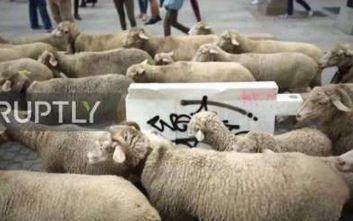 Χιλιάδες πρόβατα παρέλασαν στην Μαδρίτη