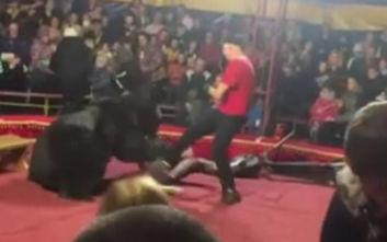 Τρόμος σε τσίρκο με αρκούδα να επιτίθεται σε θηριοδαμαστή