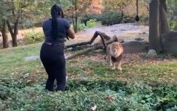 Επισκέπτρια σε ζωολογικό κήπο πέρασε τον φράχτη ασφαλείας και βρέθηκε μια ανάσα από το λιοντάρι