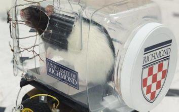 Με αυτό το πείραμα μάθαμε πως στα ποντίκια αρέσει... η οδήγηση