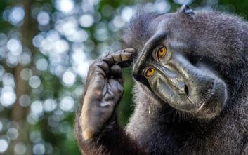 Να που οι πίθηκοι νίκησαν τον άνθρωπο σε τεστ νοημοσύνης!