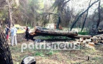 Διπλή τραγωδία στην Ηλεία: Πήγαν να κόψουν ξύλα και έχασαν τη ζωή τους