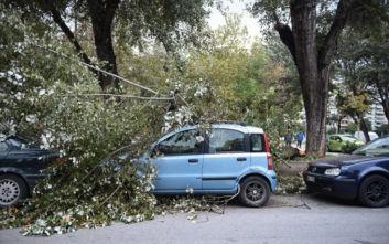 Οι ισχυροί άνεμοι έριξαν δέντρα στη Θεσσαλονίκη, πού είναι κλειστά τα σχολεία