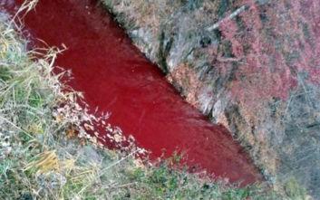 Ποταμός στη Νότια Κορέα βάφτηκε κόκκινος από αίμα χοίρων