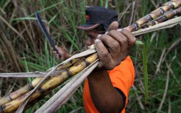 Η Βραζιλία επιτρέπει και πάλι την καλλιέργεια ζαχαροκάλαμου σε περιοχές του Αμαζονίου