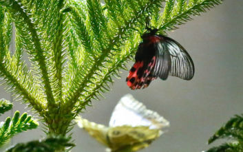 Απειλούνται με εξαφάνιση τα τροπικά φυτά