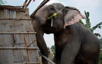 Ελέφαντας με το όνομα Μπιν Λάντεν σκόρπισε τον θάνατο