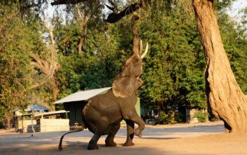 Εκατοντάδες άγρια ζώα «μετακομίζουν» από τη Ζιμπάμπουε λόγω ξηρασίας