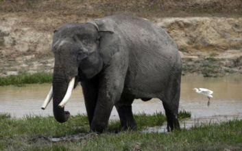 Δεύτερος ελέφαντας της Σουμάτρας βρέθηκε νεκρός σε μια εβδομάδα στην Ινδονησία