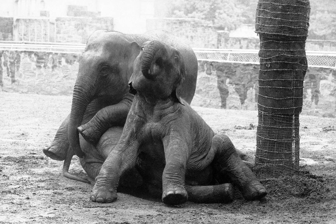 Τι αντίκρισε ο κόσμος όταν τον έβαλαν να δει «Το πιο επικίνδυνο ζώο του κόσμου»