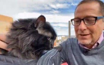 Γάτος που αγνοούνταν για 5 χρόνια βρέθηκε 1.900 χλμ. από το σπίτι του