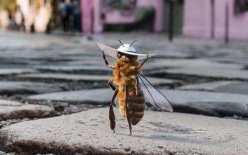 H «Β» είναι η πρώτη μέλισσα… influencer