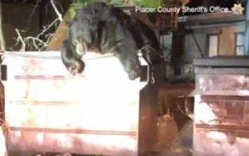 Αστυνομικοί σε δύσκολη αποστολή, απεγκλώβισαν αρκούδα από κάδο απορριμμάτων