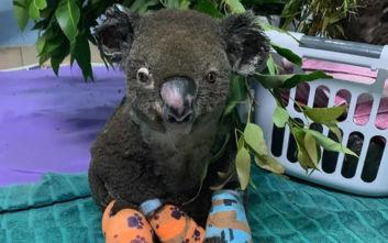 Ξεπέρασε το ένα εκατομμύριο ο έρανος για τα κοάλα στην Αυστραλία
