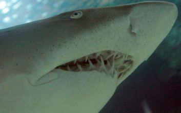 Πήγε τη σύζυγό του ταξίδι για τα γενέθλιά της στη Μαδαγασκάρη και τον έφαγεκαρχαρίας