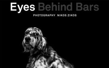 Eyes behind bars: Μία έκθεση φωτογραφίας αφιερωμένη στα αδέσποτα της Ελλάδας