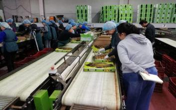 Ανοίγει η αγορά της Ταϊλάνδης για τα ελληνικά ακτινίδια