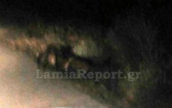 Φθιώτιδα: Κοπάδι αγριογούρουνων προκάλεσε τροχαίο