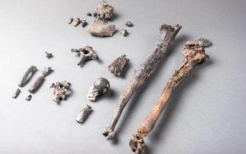 Οστά αρχαίου πιθήκου πιθανόν να ανατρέπουν όσα γνωρίζαμε για την ανθρώπινη εξέλιξη