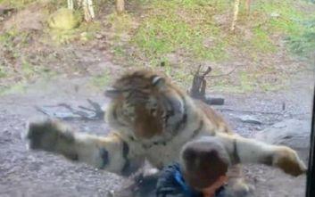 Να γιατί υπάρχει προστατευτικό τζάμι σε ζωολογικό κήπο